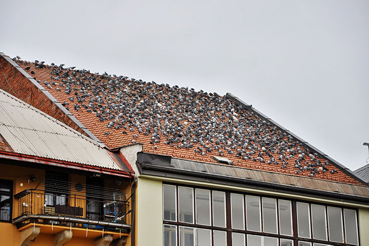 A2B Pest Control are able to install spikes to deter birds from roofs in Westcliff On Sea.