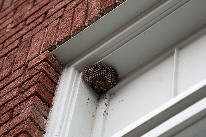 We provide a wasp nest removal service for domestic and commercial properties in Westcliff On Sea.